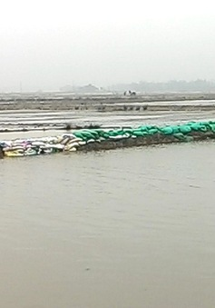 TT-Huế: Nhiều đê bao hư hỏng nặng, hơn 1.300ha lúa ngập úng