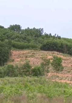 Hơn 2 năm nộp phí, nhiều hộ dân Thừa Thiên - Huế vẫn chưa được cấp đất sản xuất
