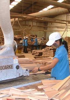 Cuộc đua quyết liệt trong lĩnh vực trồng rừng, xuất khẩu gỗ ở nước ta