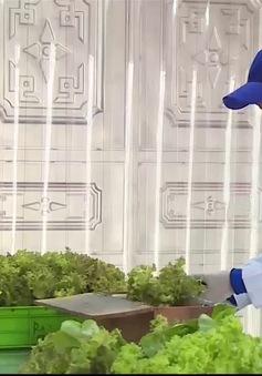 Trồng rau thủy canh: Mô hình có thực sự sạch?