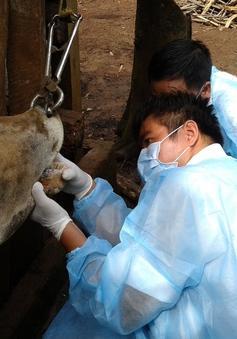 Thủ tướng chỉ đạo xuất cấp vắc-xin, hóa chất sát trùng cho 4 địa phương