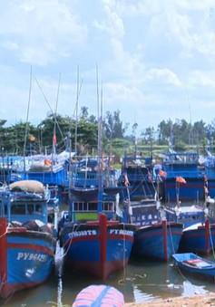 """Thua lỗ kéo dài, hàng trăm tàu cá Phú Yên """"nằm bờ"""""""
