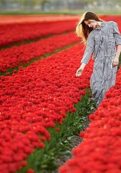 Người yêu hoa nhất định không thể bỏ qua những điểm du lịch này!