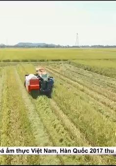 Thế nào là sản xuất gạo sạch?