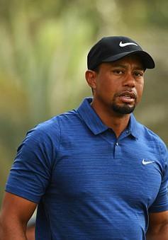 Tay golf huyền thoại Tiger Woods phải ngồi tù vì say xỉn lái xe