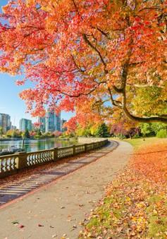 Những điểm du lịch không thể bỏ qua vào mùa thu