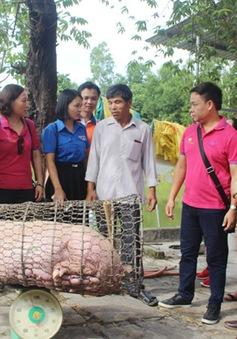 Thanh niên Quảng Trị phát động giải cứu đàn lợn trên địa bàn