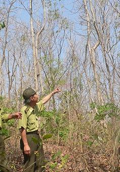 Đà Nẵng cảnh báo cháy rừng cấp 4