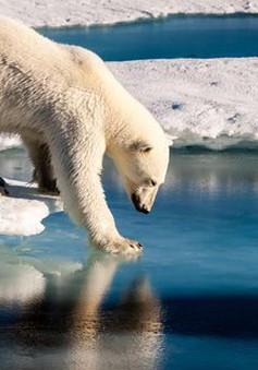 """Mỹ """"quay lưng"""" với Hiệp định Paris có thể khiến Trái đất nóng lên 0,3 độ C"""
