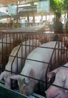 Đề án truy xuất nguồn gốc thịt lợn khó triển khai