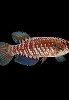 Phát hiện gần 400 loài sinh vật mới ở Amazon