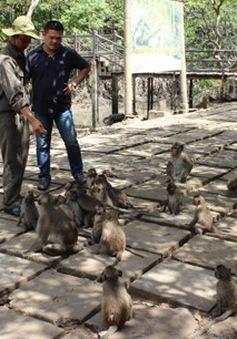 TP.HCM đẩy mạnh phát triển du lịch sinh thái tại Cần Giờ