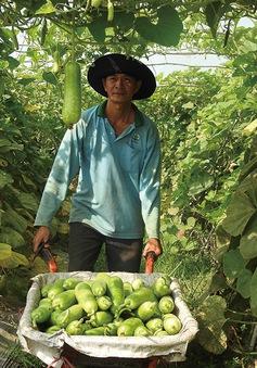 Chuyển đổi hướng sản xuất nông nghiệp ở Tây Ninh