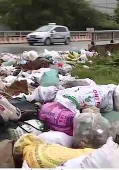 Tiềm ẩn nguy cơ sốt xuất huyết từ bãi rác thải
