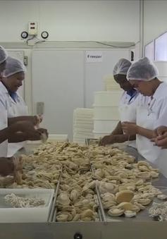 Phát triển mạnh nuôi bào ngư tại Nam Phi