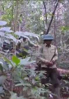 Thừa Thiên - Huế tăng cường bảo tồn các loài động vật quý hiếm