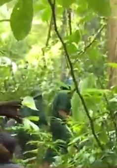 Quảng Nam tăng phí chi trả dịch vụ môi trường rừng cho các hộ dân