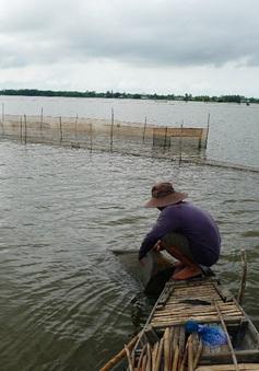 An Giang: Cấm khai thác cá linh non