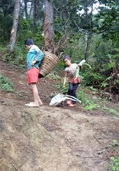Bố mẹ và anh chị lần lượt qua đời, thương hai đứa trẻ phải nghỉ học lên núi đào sắn ăn
