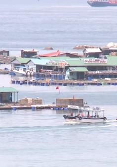 Quản lý hoạt động du lịch ở các bè nổi Ninh Thuận