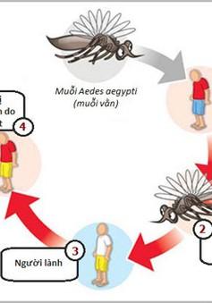 Biểu hiện và biện pháp phòng chống bệnh sốt xuất huyết