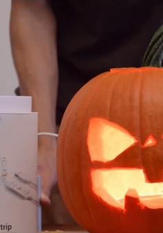 Trang trại bí ngô hút khách dịp Halloween
