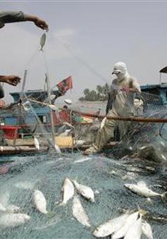 Biến đổi khí hậu có thể làm cá nhỏ đi