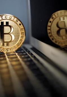 Số lượng công việc liên quan tới Bitcoin tăng mạnh