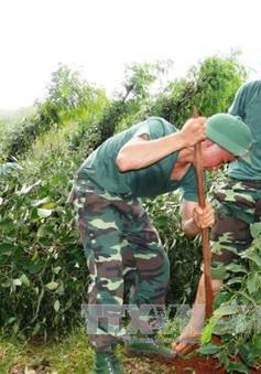 Dây kẽm và trụ tiêu tăng giá sau cơn lốc xoáy ở Bình Phước