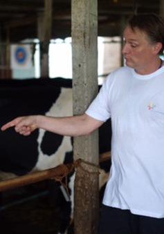 Tập huấn kỹ thuật chăn nuôi bò sữa