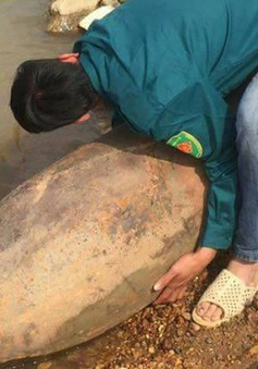 """Vĩnh Phúc: Ngư dân phát hiện quả bom """"khủng"""" khi rà sắt ven sông"""