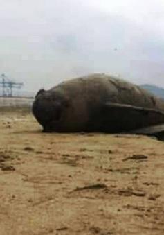 Phát hiện 2 xác cá heo dạt bờ biển Thanh Hóa