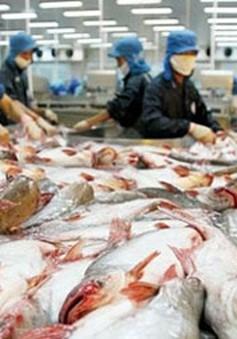 Giải pháp cho thị trường cá tra