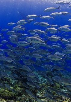 Lều sinh học giúp phục hồi trữ lượng cá