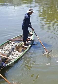 Bình Thuận: Khẩn trương tìm nguyên nhân cá nuôi lồng bè chết ở đảo Phú Quý