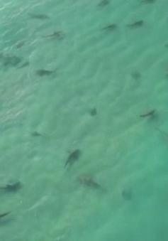 Hệ thống mới phát hiện cá mập tại Australia