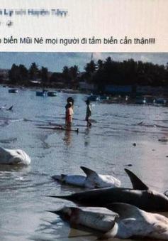 Sẽ xử phạt người tung tin đồn cá mập xuất hiện ở biển Mũi Né