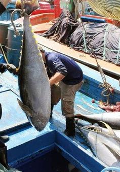 Xuất khẩu cá ngừ chuyển dịch sang ASEAN và Trung Đông