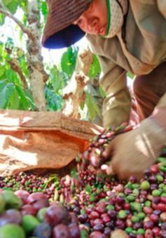 Thời kỳ phát triển mới của ngành cà phê