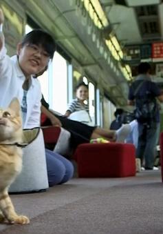 Chuyến tàu cà phê mèo đầu tiên tại Nhật Bản