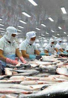 Xuất khẩu cá tra sang châu Âu và Mỹ giảm mạnh