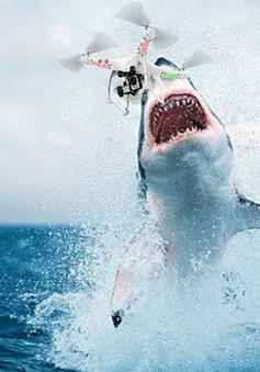 Trí tuệ nhân tạo hỗ trợ phát hiện nhanh cá mập tại các vùng biển của Australia