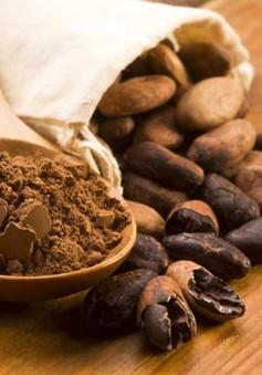 Cacao có thể ngăn ngừa tiểu đường tuýp 2