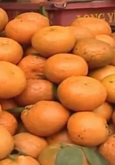 Khó khăn trong thúc đẩy tiêu thụ cam sành Hà Giang