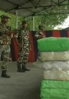 Ấn Độ thu giữ hơn 1 tấn cần sa