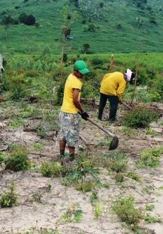 Lâm Đồng: Lấn chiếm đất rừng vẫn diễn biến phức tạp
