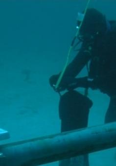 Cáp quang biển Liên Á dự kiến sẽ được khôi phục vào ngày 25/2