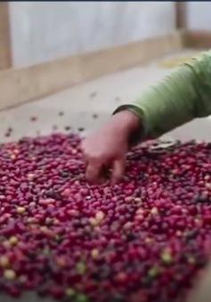 Brazil tập trung vào thị trường cà phê cao cấp