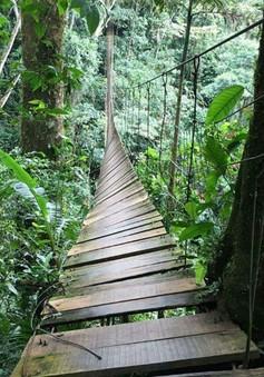 Sập cầu treo tại Colombia, nhiều người bị rơi xuống vực