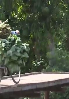 Hàng chục cây cầu ở Quảng Trị xuống cấp nghiêm trọng